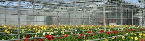 Greenhouse and Tunnel Films